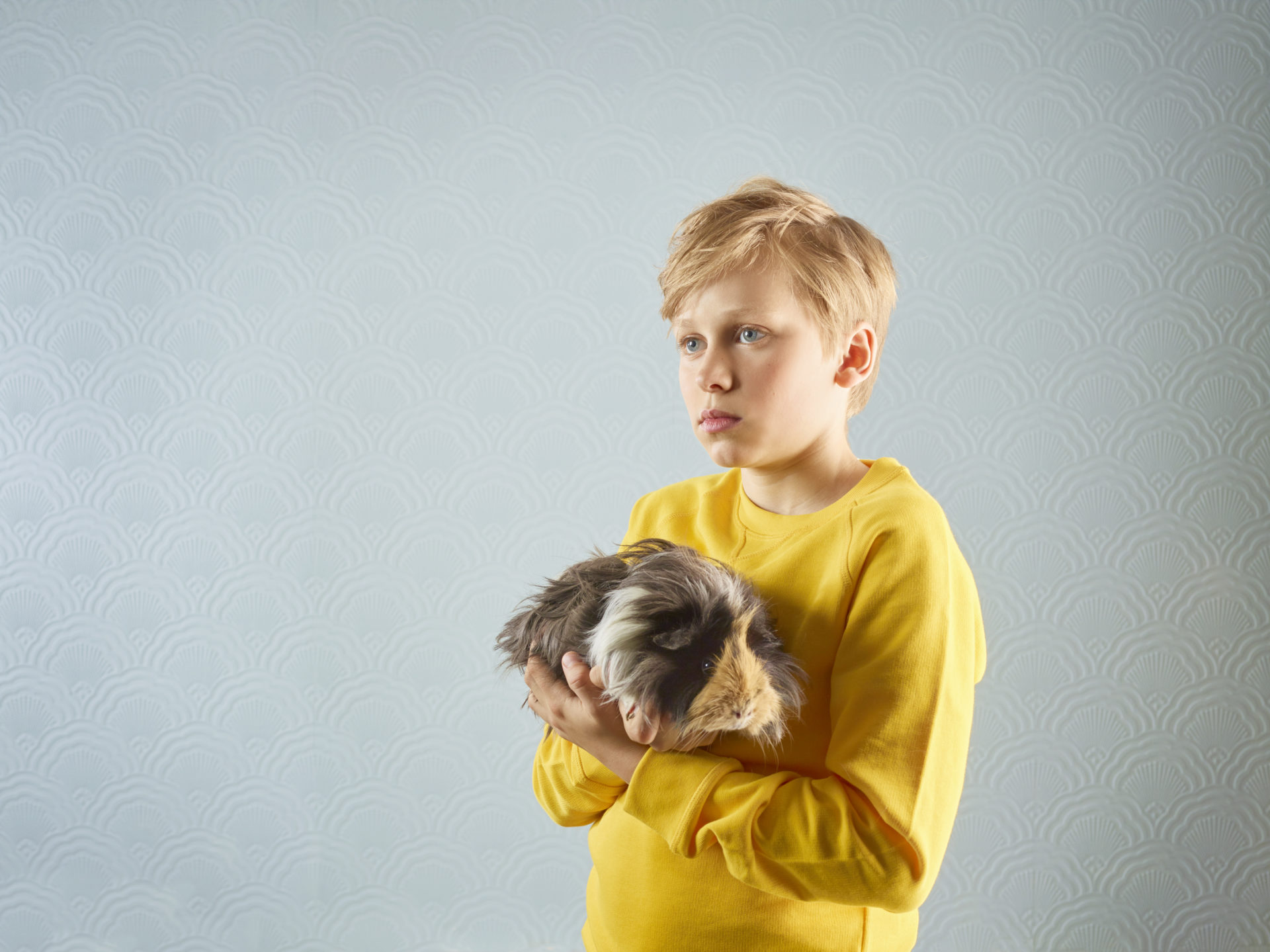 kids and pets – boy holding a guinea pig – Shaw & Shaw Photography – Shaw and Shaw photographers photography Manchester