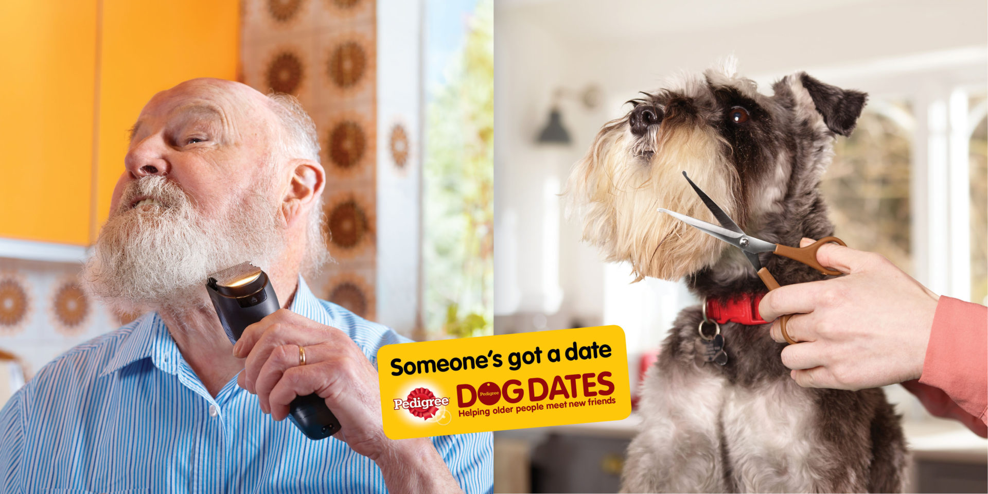 Shaw and Shaw Advertising Photographers – doggy dates Pedigree dog food AMVDDBO  Dog GroomingPedigree Dog Grooming poodle parlour