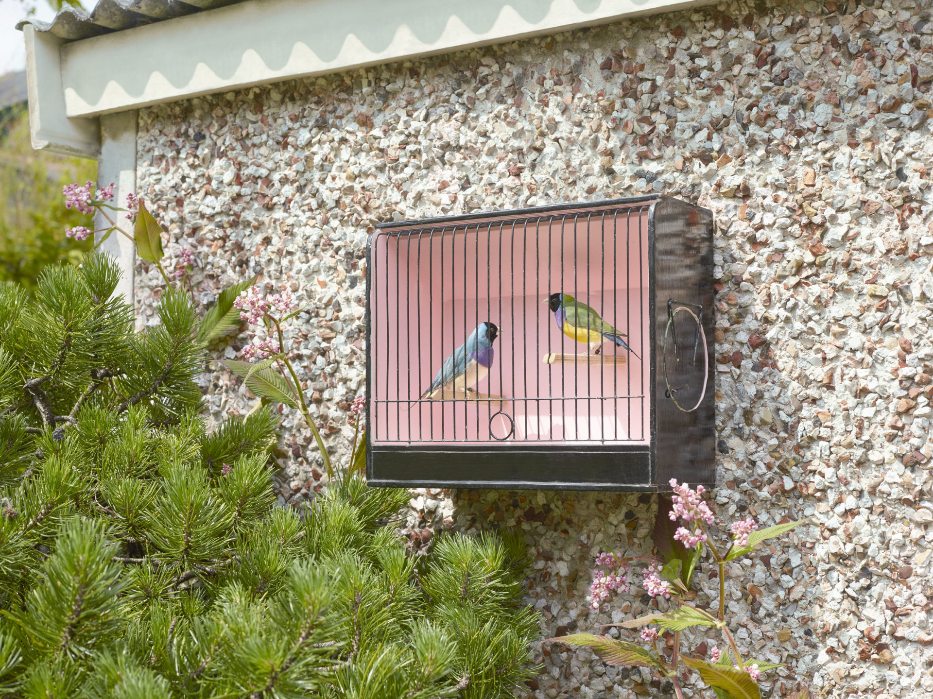 Finches in a pink cage outside – pebbledash garage – love birds – Shaw and Shaw Advertising photographers photographer photography