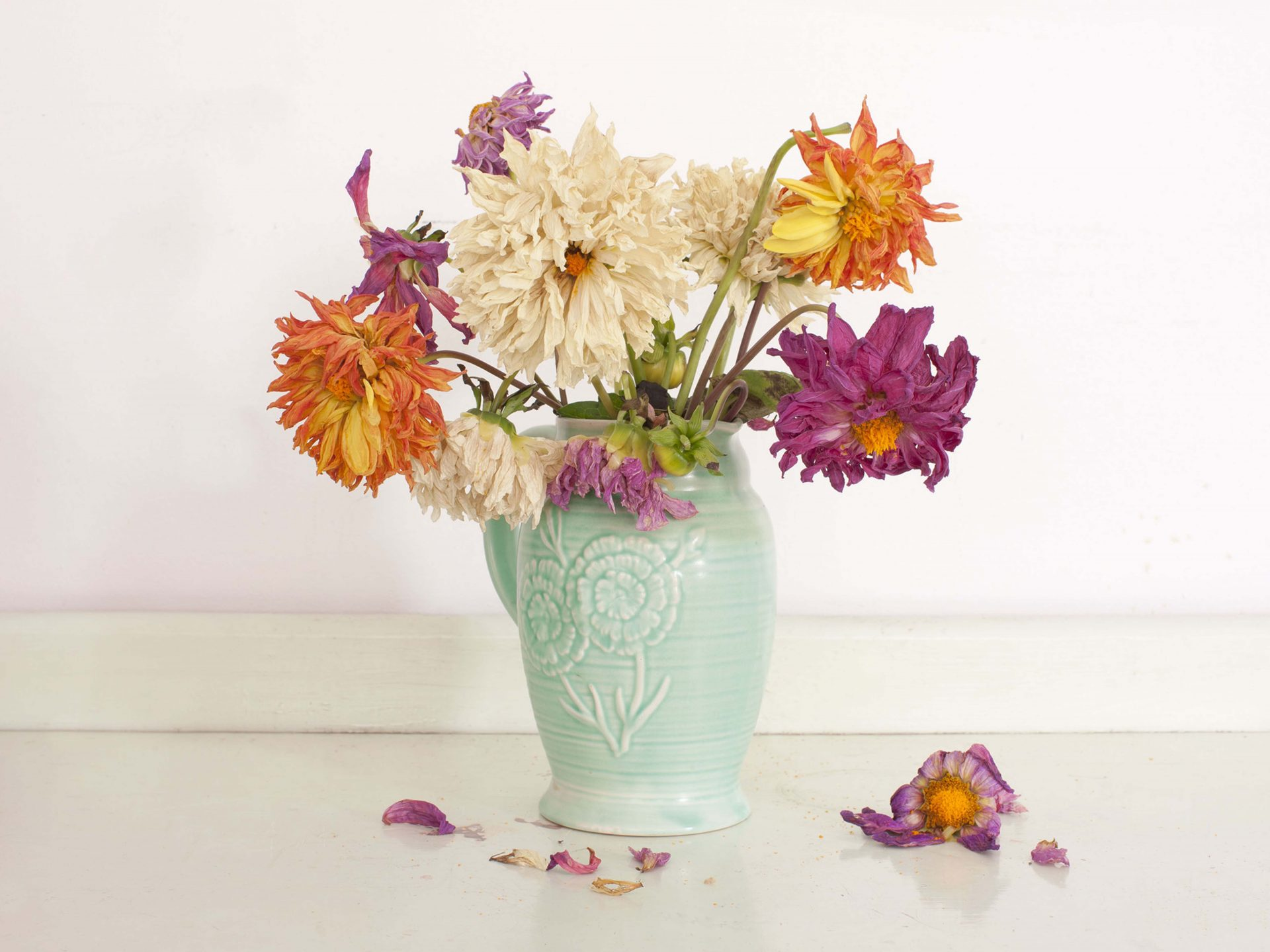 Shaw & Shaw photography – Vase of Dahlias – dying flowers wilting  – Shaw and Shaw Advertising photographers photographer photography