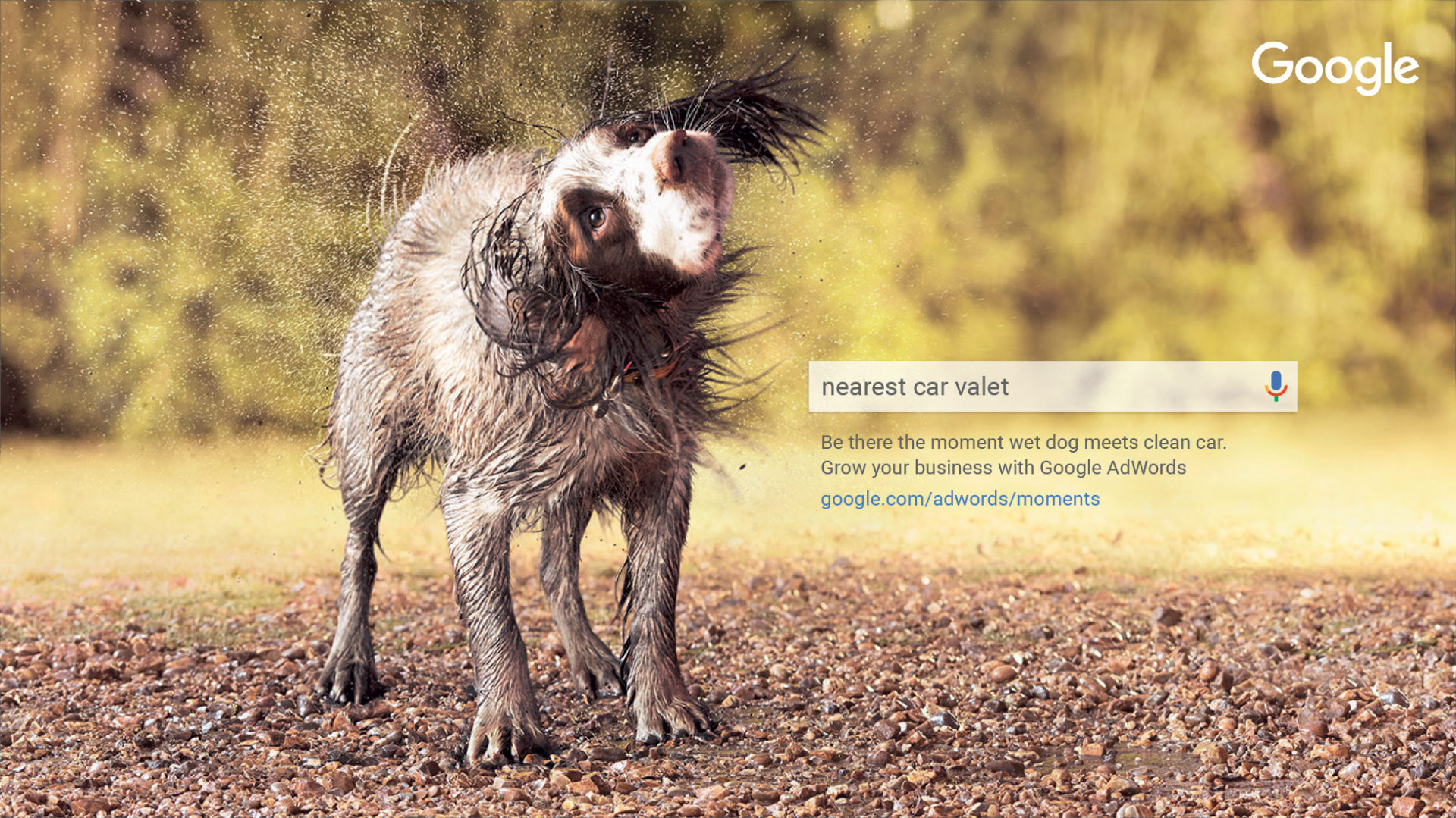 Adam & Eve DDB – Google dog shaking poodle parlour – Shaw and Shaw Advertising photographers photographer photography