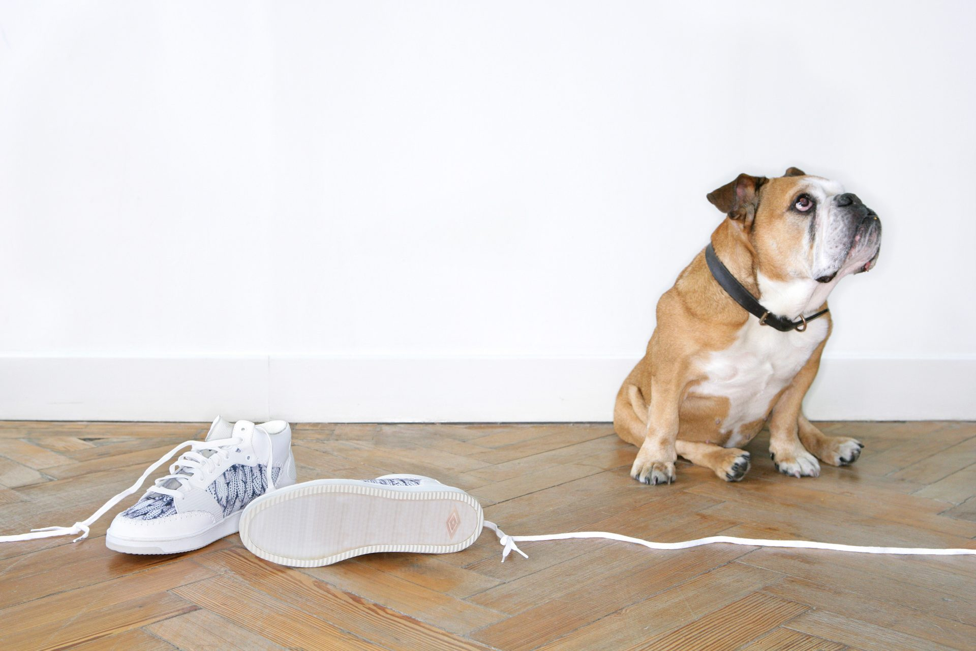 Shaw & Shaw – Umbro Kim Jones – dog and a pair of trainers – Shaw and Shaw Advertising photographers photographer photography